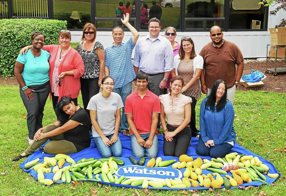 Watson Inc.'s employee Garden Club has donated the largest harvest of the season to WHEAT (West Haven Emergency Assistance Taskforce) in conjunction with Connecticut Food Bank's Plant a Row for the Hungry campaign. Photo: CONTRIBUTED PHOTO   / Watson Inc.