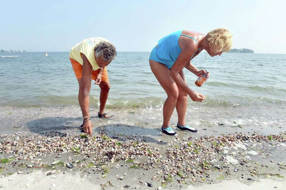 Roger Attianese, left, and his wife, Joyce, of Bridgeport collect shells Sept. 2 at Silver Sands State Park in Milford. Photo: Arnold Gold — New Haven Register