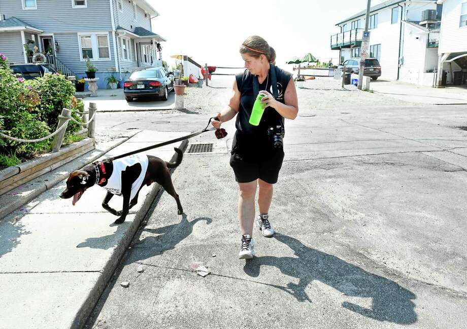 (Arnold Gold-New Haven Register)   Joan Smeland walks her nine-year-old chocolate labrador retriever, Buddy, on Deerfield Ave. in Milford Sunday. Photo: Journal Register Co.