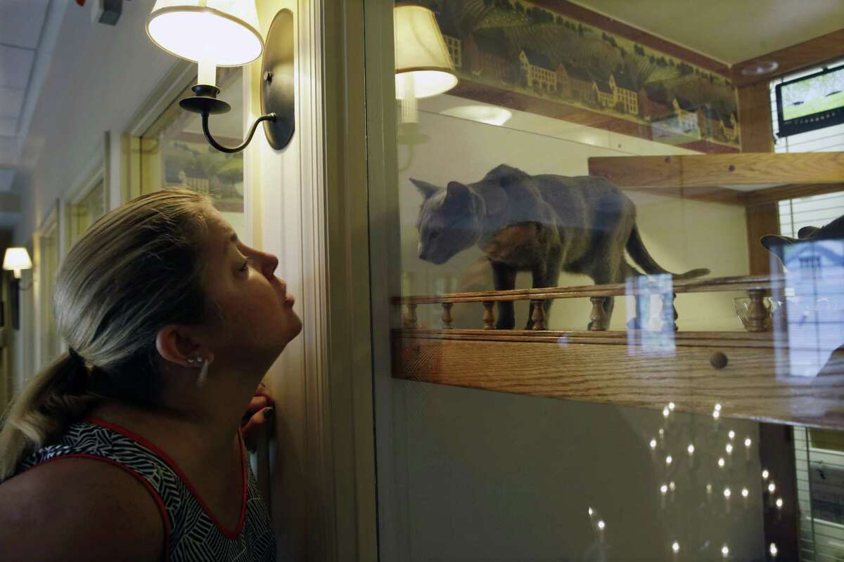 In this photo taken Tuesday, Aug. 4, 2015, Shannon Muller visits her Russian blue cat, Boris, at his enclosure with small beds, video and a clock, at Morris Animal Inn in Morristown, N.J. Boris is being pampered in ways traditionally reserved for dogs just a few years ago. The number of feline guests at this trendsetting pet hotel have gone up, as have estimates of the number of feline pets in the United States.
