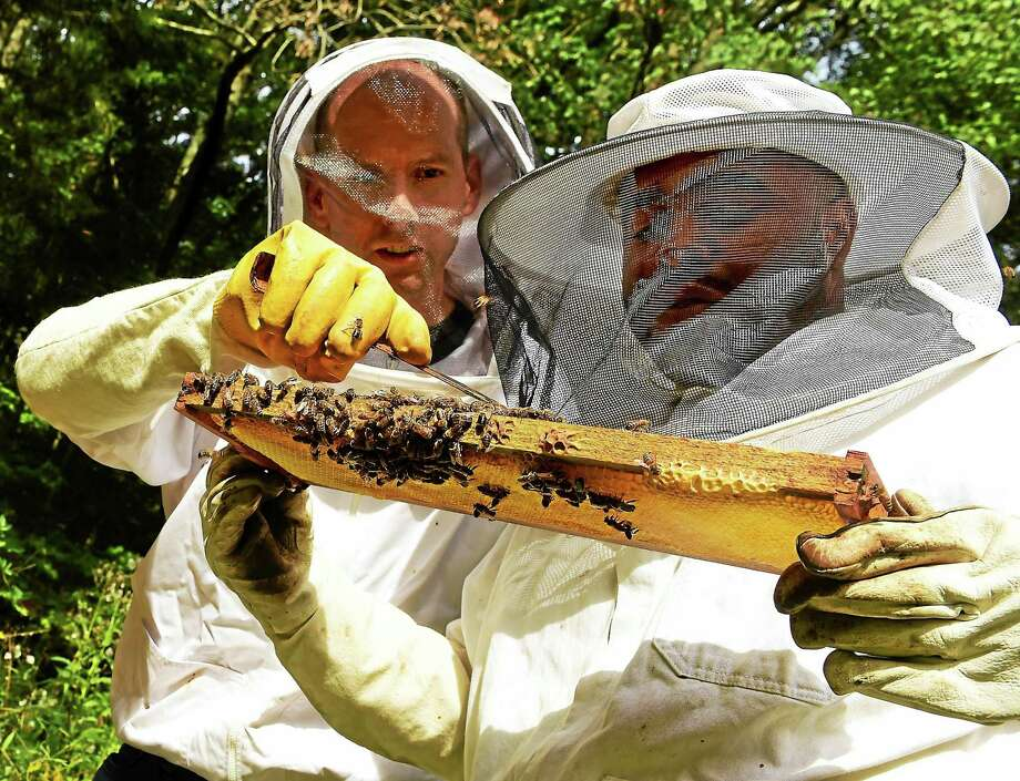 Beekeeper Jason Morrill of Woodbridge, left, and New Haven Register reporter Shahid Abdul-Karim, inspect a beehive at Morrill's home Saturday, Sept. 26, 2015. Photo: Peter Hvizdak — New Haven Register   / ©2015 Peter Hvizdak