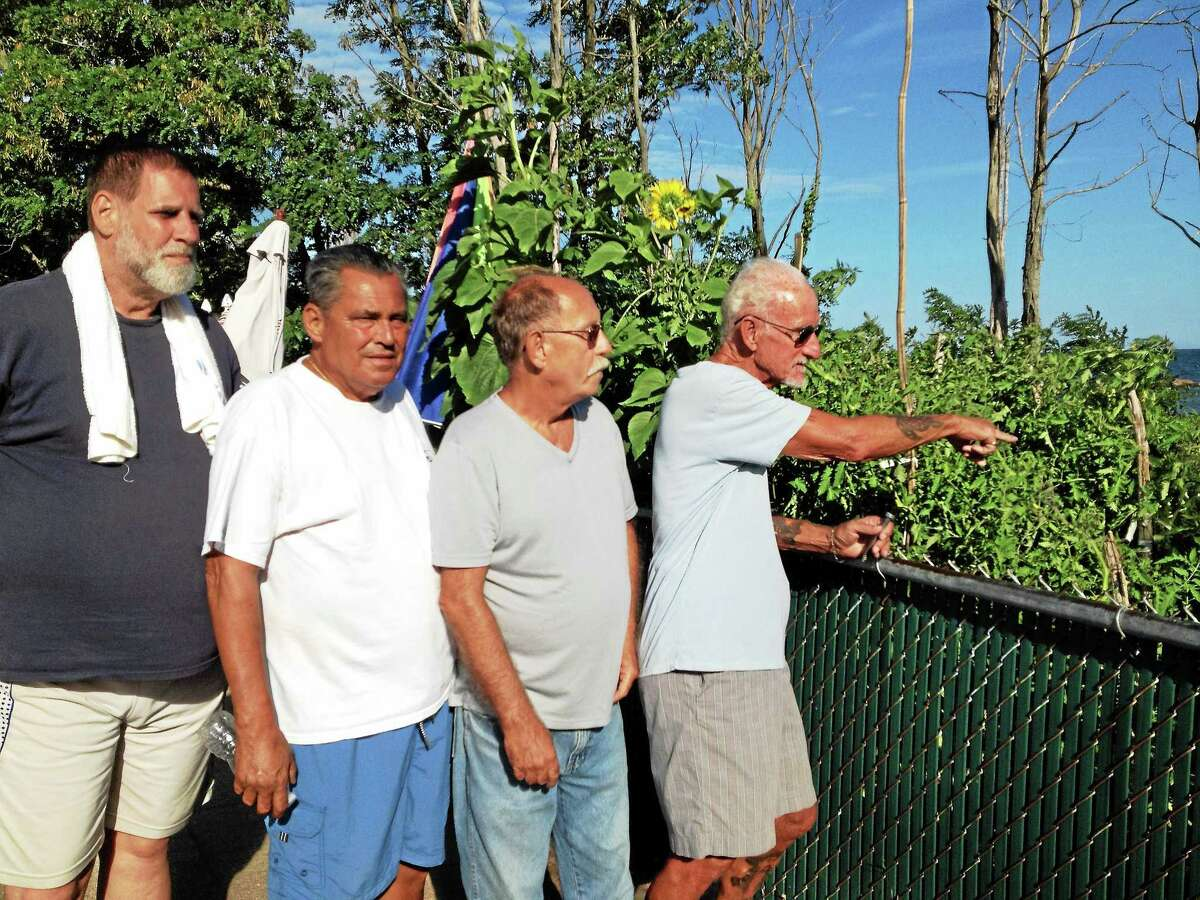 West Haven bocce player Ralph Manzo, far right, shows where vandals picked a bunch of tomatoes from the vegetable garden adjacent to the John Barone Bocce Court, then smashed some of them on the boardwalk others against a wooden storage shed. With him, from right, are Ed Cormier, John DeAngelo and Dave Lockhart.