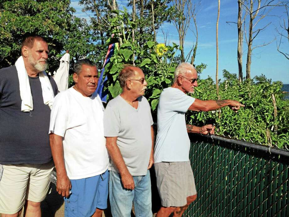 West Haven bocce player Ralph Manzo, far right, shows where vandals picked a bunch of tomatoes from the vegetable garden adjacent to the John Barone Bocce Court, then smashed some of them on the boardwalk others against a wooden storage shed. With him, from right, are Ed Cormier, John DeAngelo and Dave Lockhart. Photo: Mark Zaretsky — New Haven Register
