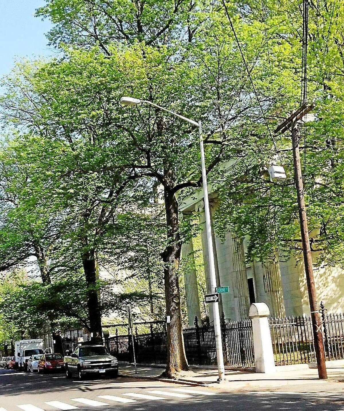 Three large elm trees on Grove Street, almost directly across from the front gate of the Grove Street Cemetery, upon which removal notices are posted.