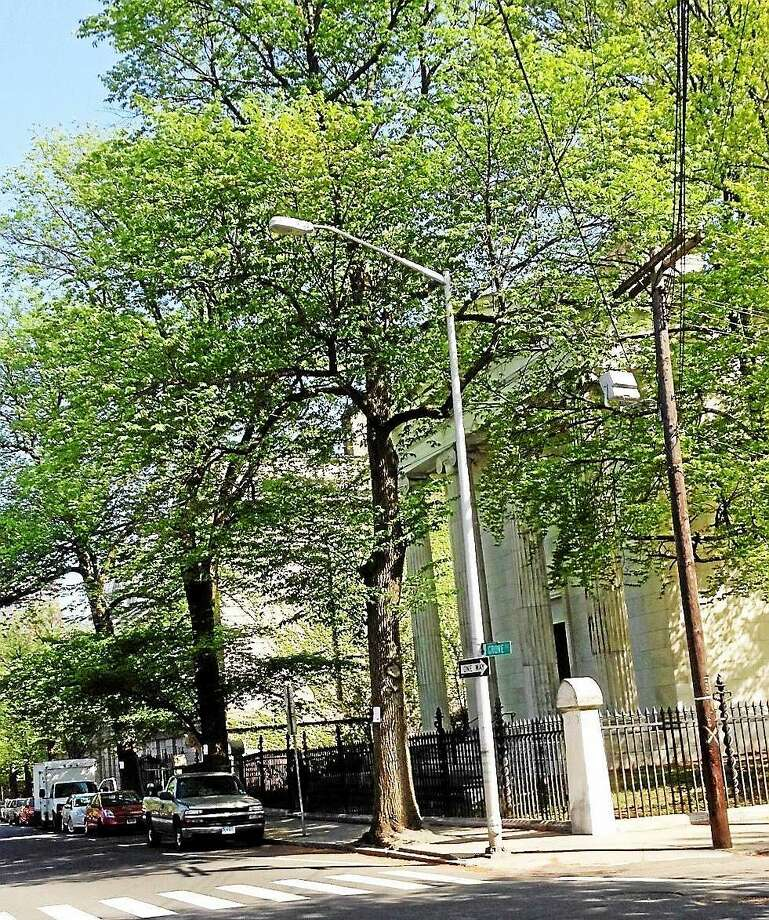 Three large elm trees on Grove Street, almost directly across from the front gate of the Grove Street Cemetery, upon which removal notices are posted. Photo: Randall Beach — New Haven Register