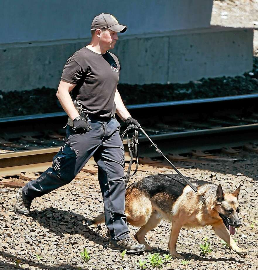 A Connecticut State Police K-9 unit complete a search  around the State Street Railroad Station in New Haven Thursday afternoon, July 16, 2015 after two severed legs were discovered Wednesday and then, later in the evening, an arm was found in a plastic bag. Photo: (Peter Hvizdak - New Haven Register)   / ©2015 Peter Hvizdak