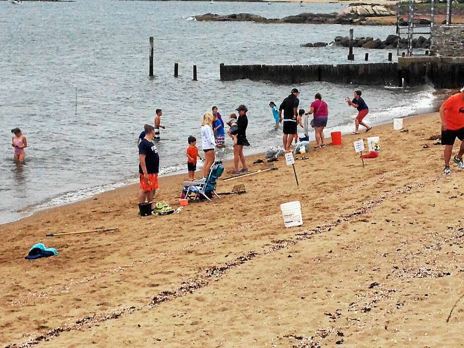 Families flocked to Madison for the 2014 Summer Clam Dig and Oyster Harvest. Photo: CONTRIBUTED Photo — Stephen Nikituk