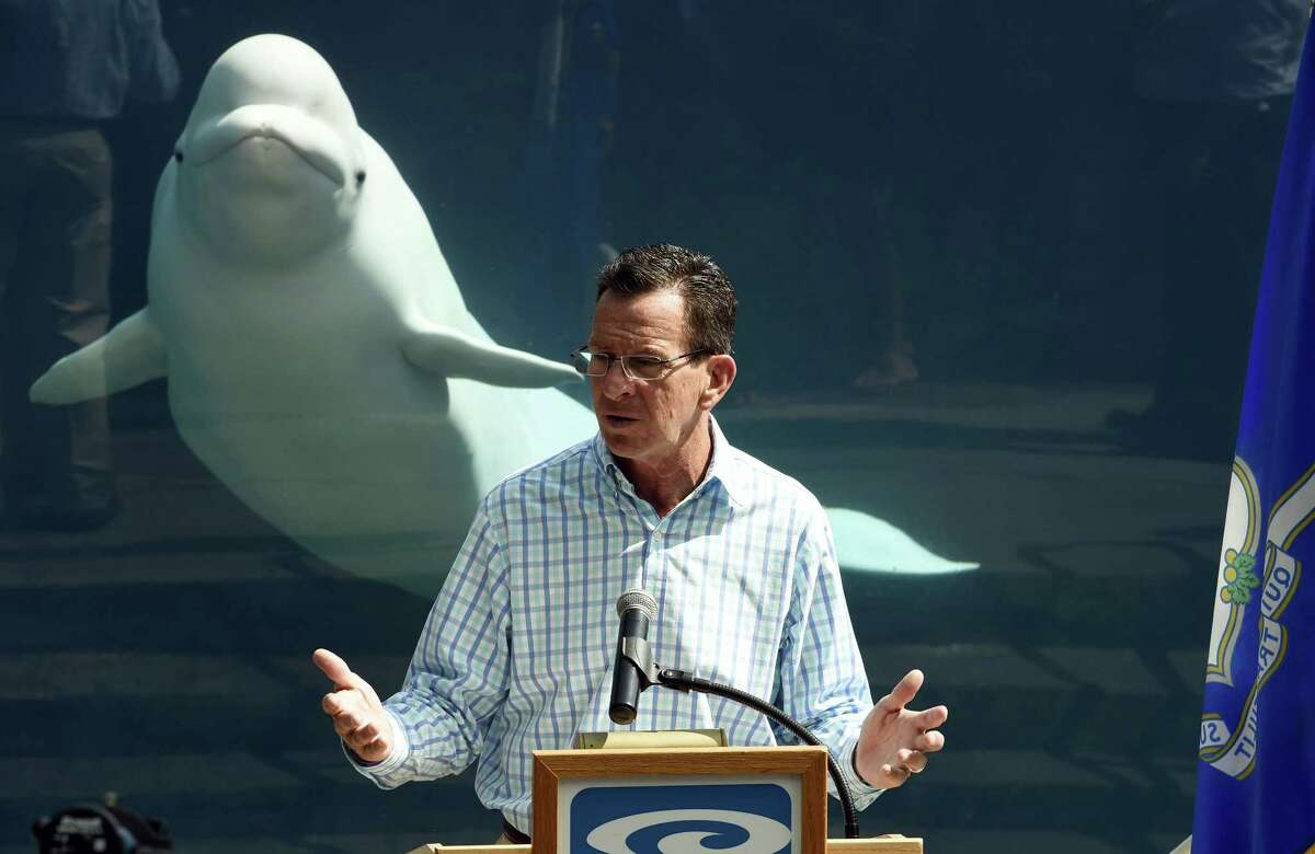 Connecticut Gov. Dannel Malloy speaks at a news conference while Juno the Beluga whale swims from the Alaskan Coast exhibit, at the Mystic Aquarium in Mystic, Conn., on Wednesday, Sept. 2, 2015. Malloy has found himself upstaged by a beluga whale during a tourism news conference at the Mystic Aquarium. Malloy was standing in front of the Alaskan Coast exhibit on Wednesday, touting an increase in summer tourism in Connecticut, when a whale named Juno swam over to the glass to watch the proceedings.
