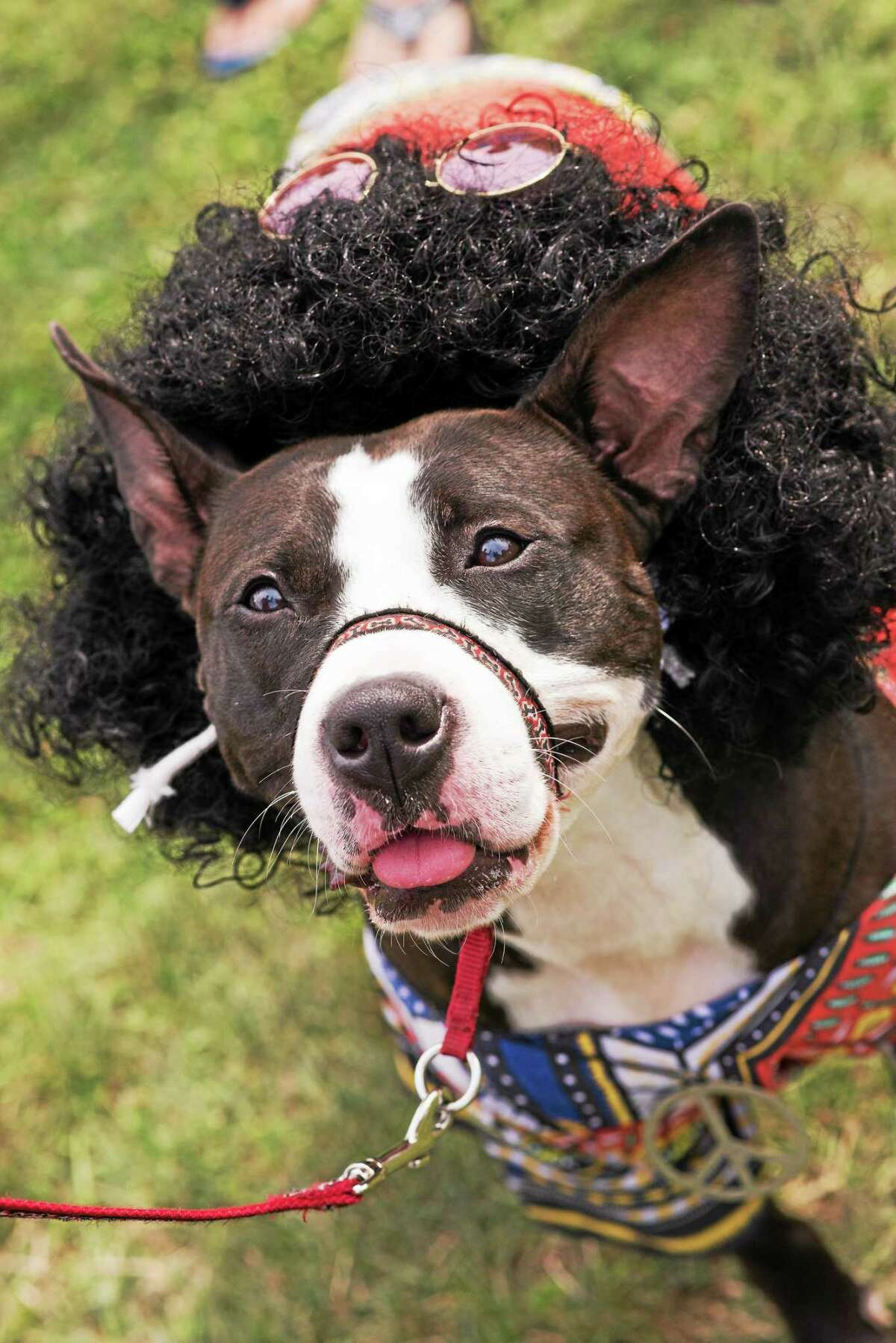Dogs in costume are just one of the festivities at Woofstock on the Branford Green.