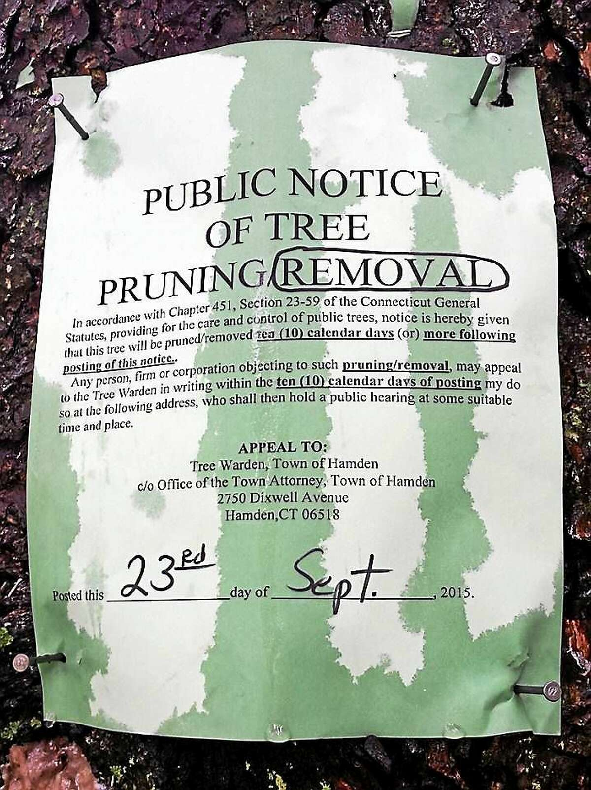 Public Notice of Tree Removal document from the Town of Hamden on the tree near Chris Cozza's home. The photograph was taken by Save Hamden Trees.