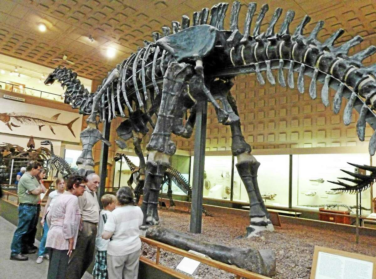 The large mounted dinoasur specimen at Peabody was renamed brontosaurus this spring (from apatosaurus).