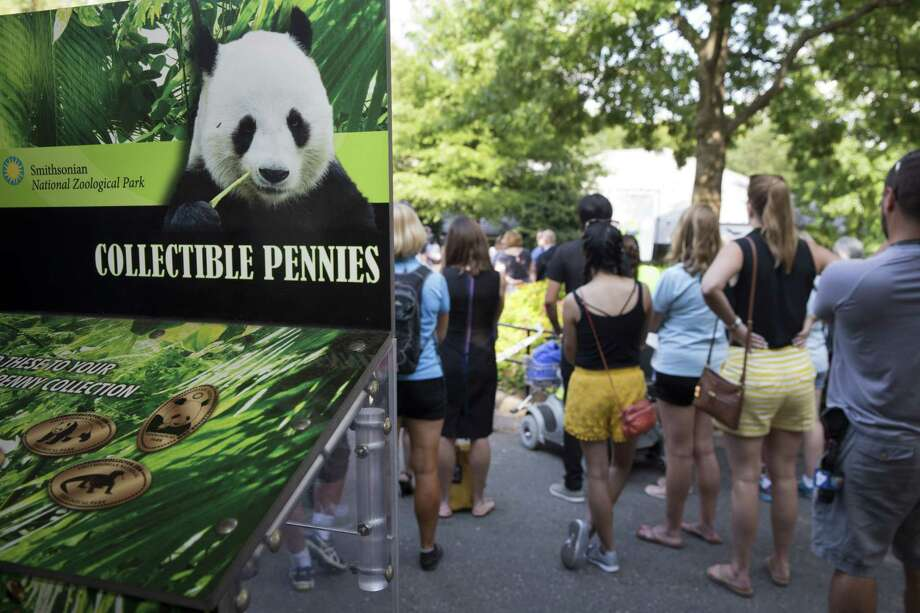 Visitors to the Smithsonian's National Zoo listen during an announcement about the death of one of the new panda cubs during a news conference at the Zoo in Washington Wednesday. Photo: AP Photo   / AP