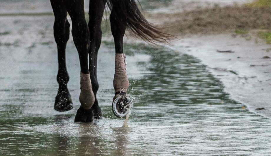 This horse leaves the main track even in the inclement weather, horses still have to go out for exercise and their handlers continue to care for them Monday July 24, 2017 at the Saratoga Race Course in Springs, N.Y. (Skip Dickstein/Times Union) Photo: SKIP DICKSTEIN