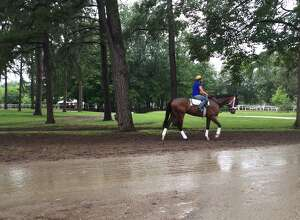 After three days of almost perfect (OK, it was a little hot) weather at Saratoga Race Course, it felt like late fall at the Spa on Monday. It rained all morning and the temperature did not get out of the 60s. But life went on as usual on the Saratoga backstretch. Here is a horse heading to the main track under cover from the trees during a light rain on Monday morning. Let's hope days like this are few and far between now and Labor Day. (Tim Wilkin / Times Union)