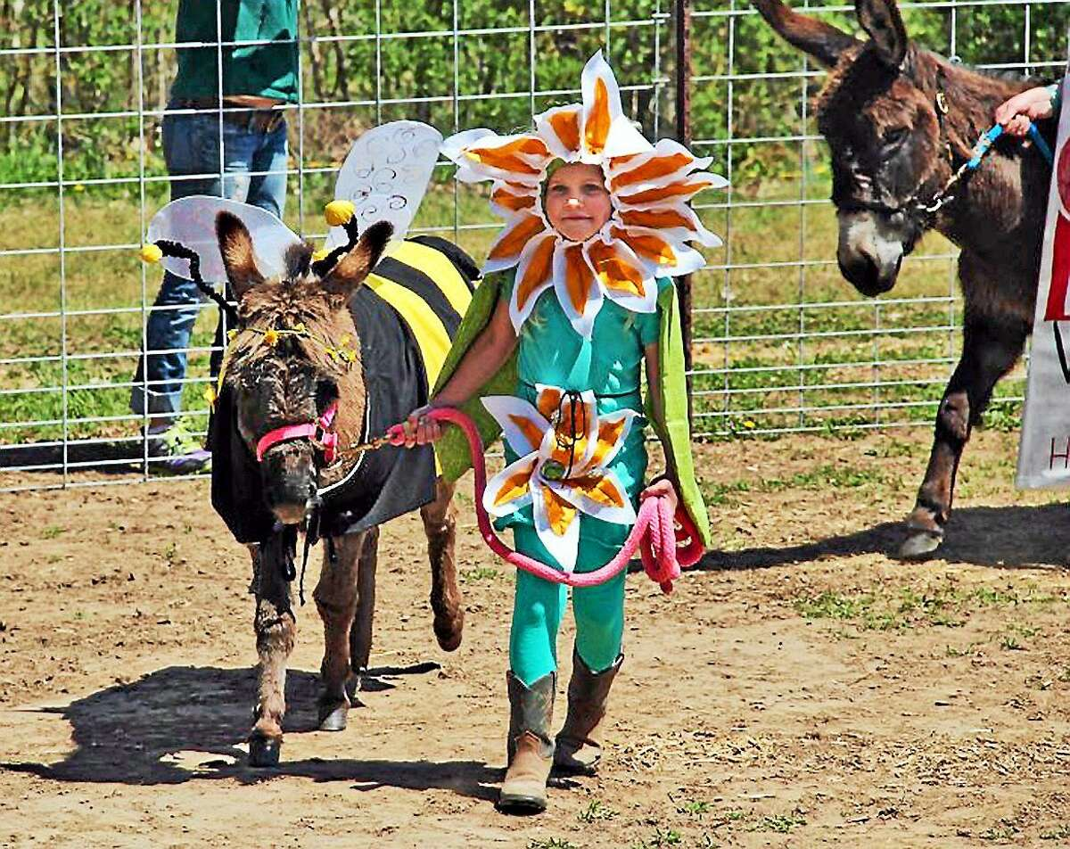 The Donkey & Mule Festival costume event is one of the most popular with little ones.