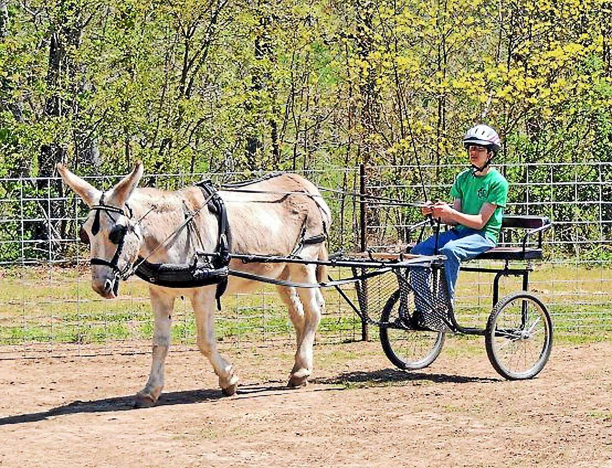 They run for the roses at Churchill Downs late Saturday afternoon, but earlier in the day, donkeys and mules have their time to shine.