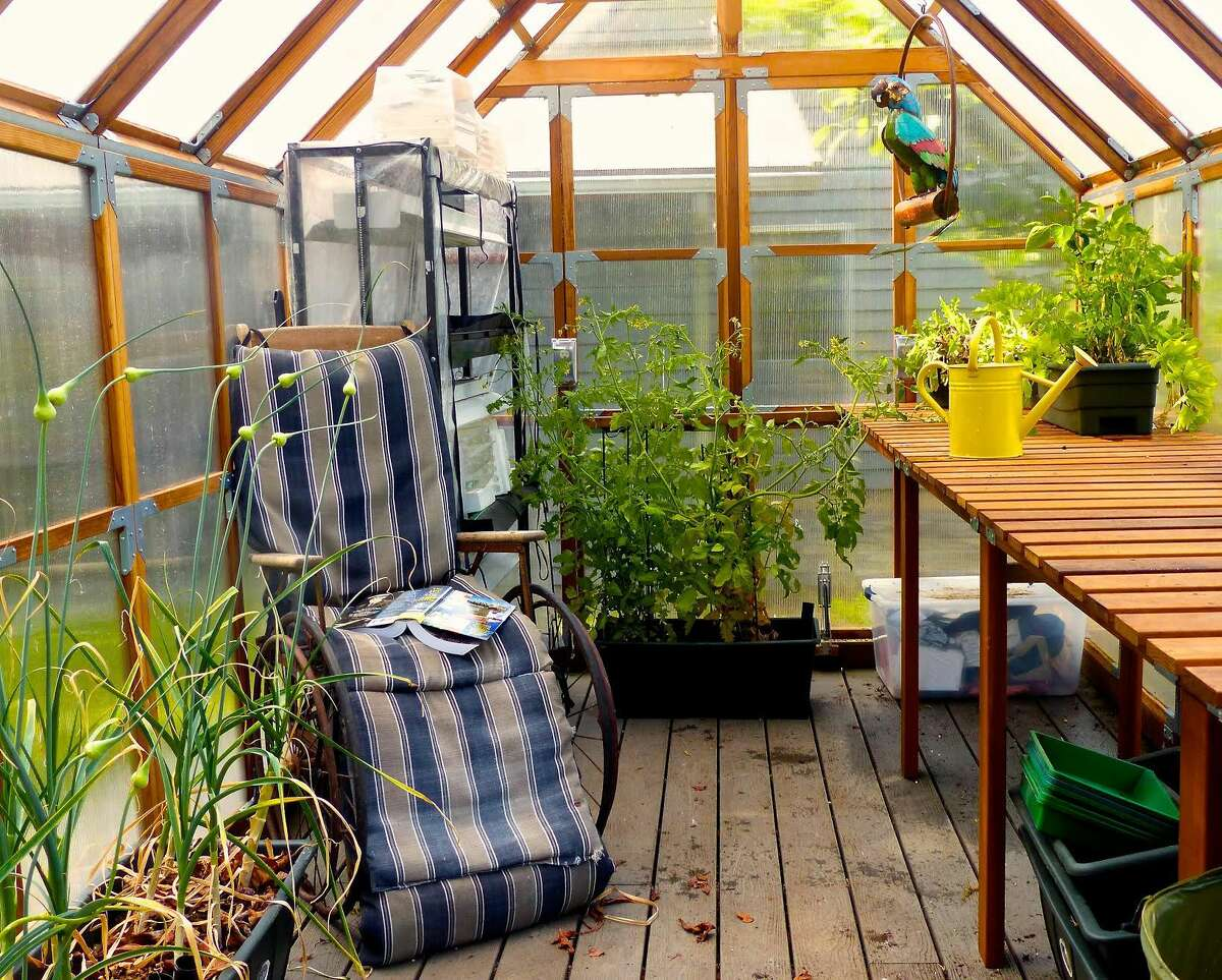 In this June 20, 2015 photo, a metal parrot provides some greenhouse color while an antique wheelchair serves as the setting for some rainy day reading near Langley, Wash. Garlic grows in the foreground, tomatoes in the rear with leaf lettuce and sweet peppers thriving in smaller containers on the bench.