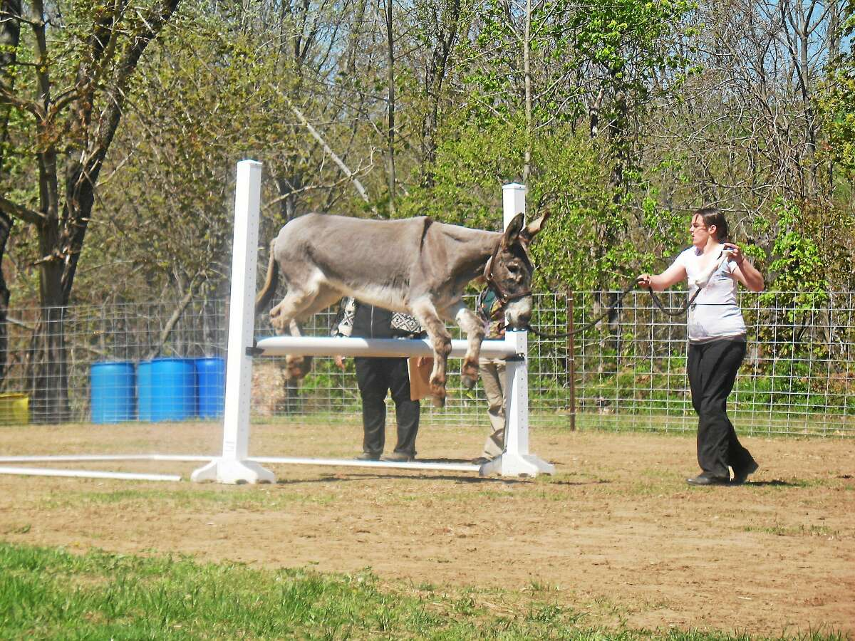 The Donkey and Mule Show is at Bishop's in Guilford.