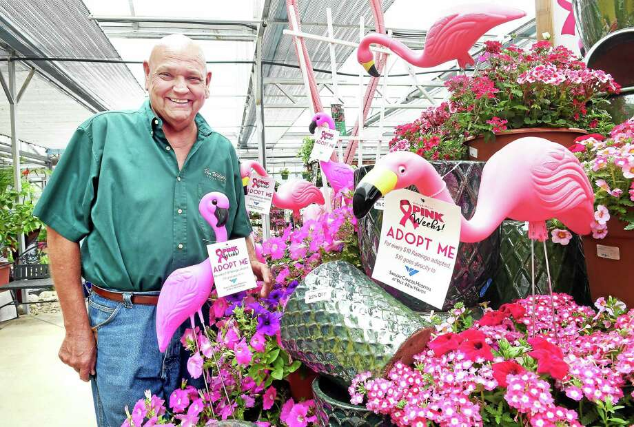 Bill Van Wilgen, owner of Van Wilgen's Garden Center in North Branford, is photographed by a display of pink flamingos on sale to benefit the Smilow Cancer Hospital at Yale-New Haven on 6/19/2015. Photo: (Arnold Gold - New Haven Register)