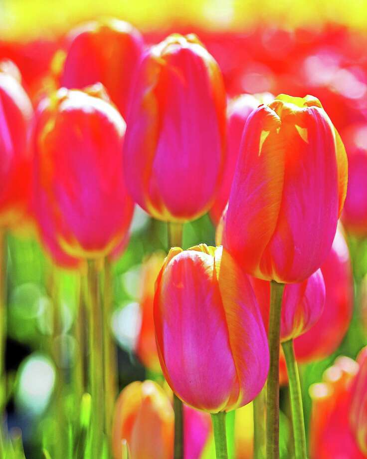 Spring Expo will put some color in your weekend. Photo: Thinkstock   / iStockphoto