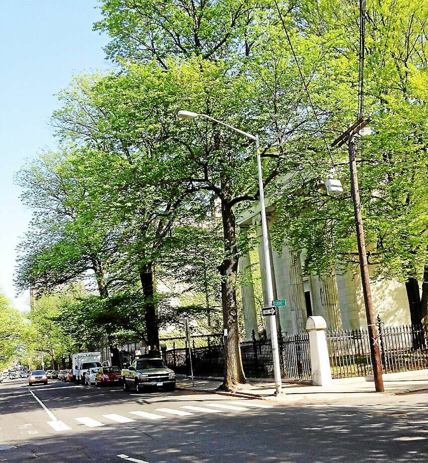 The future of these three Elm trees on Grove Street in New Haven will be discussed at a public hearing at a date to be set. Photo: (Randall Beach - New Haven Register)