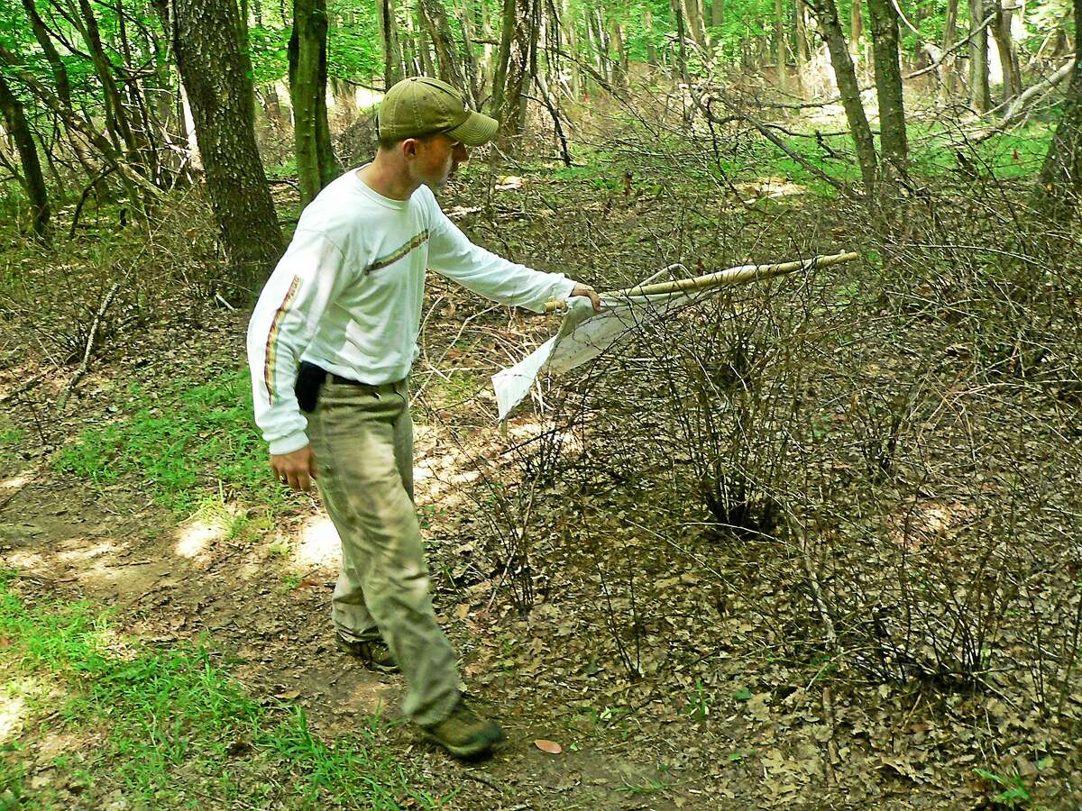 Joseph Barsky of the Connecticut Agricultural Experiment Station drags a piece of cloth to collect ticks for testing.