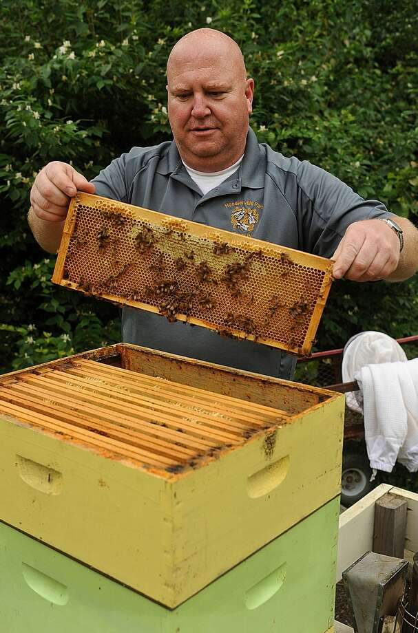 In this May file photo, a beekeeper in Indiana shows that he has also been contacted often to relocate bees at this time of year, when honeybees go looking for a new home. A queen bee takes half of the hive and starts her search for a new location, and it can result in people finding a swarm of bees near a tree or building. Photo:  (Joseph C. Garza/The Tribune-Star Via AP)  / Tribune-Star