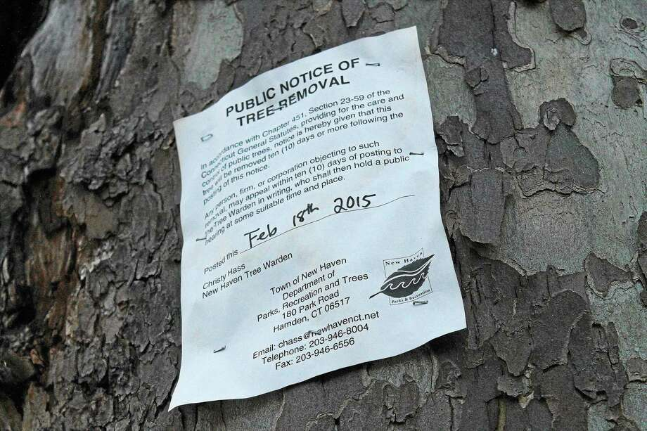 Alder Richard Furlow, D-27, has called for a public hearing that he hopes will improve the way the city manages its trees. Pictured is a copy of a removal tag affixed to an Elm Street tree. Photo: Evan Lips - New Haven Register