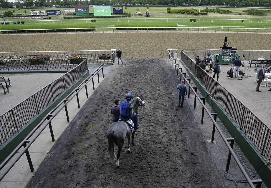 Belmont Stakes entrant Frosted pauses before entering the track for a workout Friday at Belmont Park in Elmont, N.Y. Photo: Julie Jacobson — The Associated Press   / AP