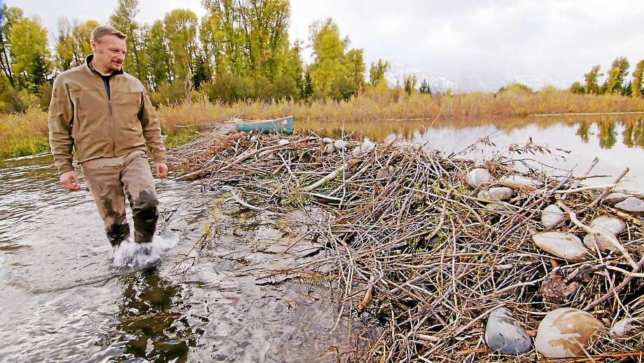"Host and ecologist Chris Morgan explores beaver dams during the second episode of ""Animal Homes"" on CPTV at 8 p.m. for the next three Wednesdays. Morgan closely examines the architecture and layouts of these animal homes, which provides insight into their impressive problem solving and innovation skills. Photo: CPTV"