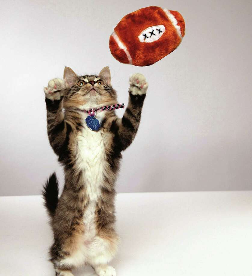 """Hallmark Channel gets the ball rolling Sunday at noon with the 3-hour """"Kitten Bowl."""" Photo: Brian Friedman - Hallmark Channel    / © Crown Media United States, LLC"""