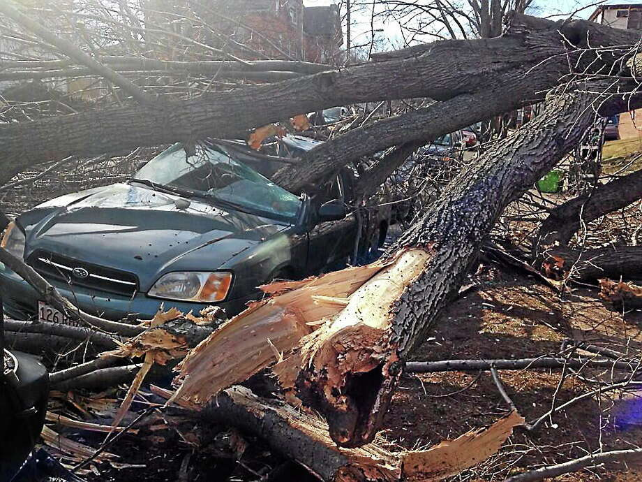 A 70-foot tree fell on three cars on Cottage Street in New Haven Wednesday. Photo: Mercy A. Quaye — New Haven Register