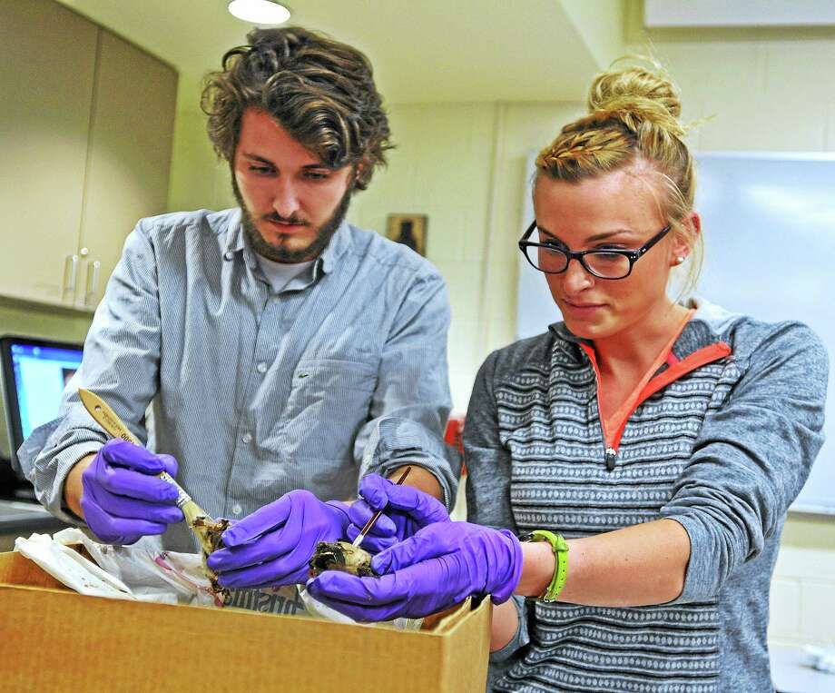 John Houston, a senior, and Rebecca Stabile, a junior, brush off bird bones in their classroom at Quinnipiac University. The Quinnipiac students were examining the contents of a ceramic pot containing various items including a human skull (probably from the 1800's), animal bones, wooden sticks with names and other various items possibly used in a Santeria ritual. The forensic anthropology class is submitting the results of their finding to the state's medical examiner's office.  3/25/14 Photo: Peter Casolino — New Haven Register