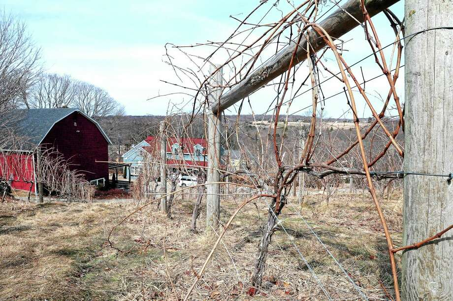 Grape vines grow on a hillside overlooking a converted dairy barn that now serves as a tasting room for the Jones Winery at the Jones Family Farms in Shelton. Photo: Arnold Gold — New Haven Register