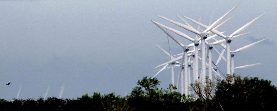 A crested caracara flies over trees at the Kenedy Ranch near Sarita, Texas near windmills operated by the Gulf Wind wind farm. Photo: JOHN DAVENPORT, SAN ANTONIO EXPRESS-NEWS / jdavenport@express-news.net