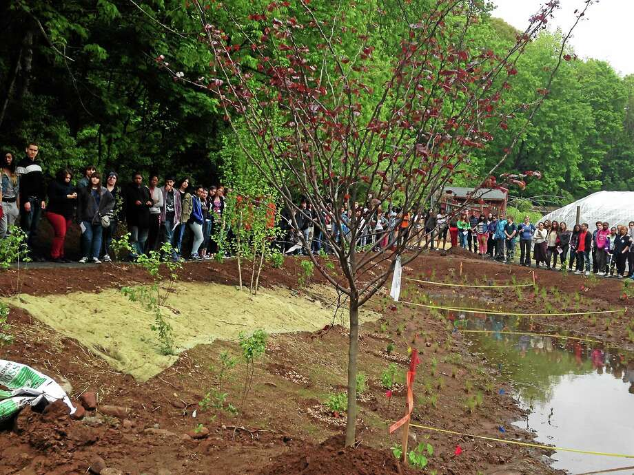 A tree and educational wetlands were planted in honor of Javier Martinez, an 18-year-old Common Ground High School student who was shot and killed in New Haven in December 2013. Photo: Mercy A. Quaye — New Haven Register