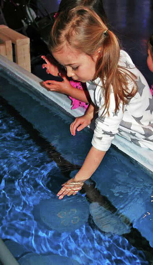 """When you reach into the touch tank, you'll know what it feels like to """"Jiggle a Jelly."""" Photo: Maritime Aquarium At Norwalk"""