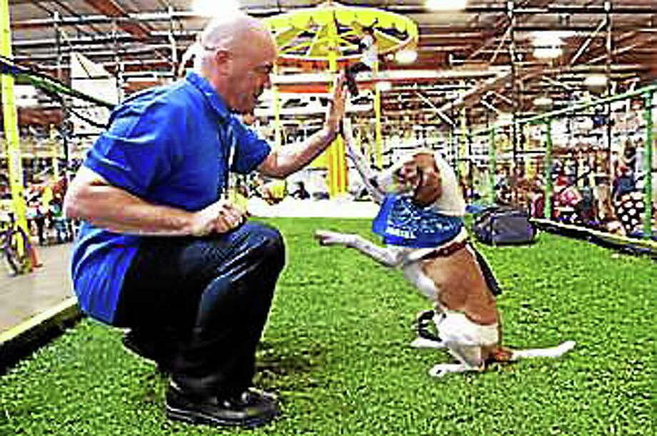 Joe Dwyer with Daniel the beagle. (Courtesy - http://www.danielthebeagle.com/) Photo: Journal Register Co.