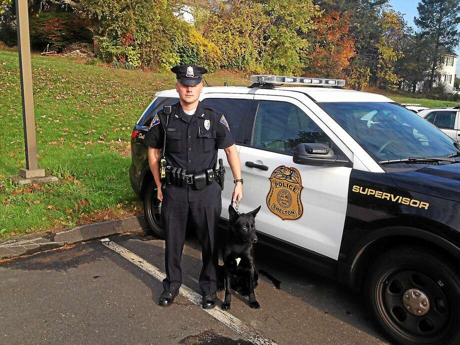 Shelton Police Officer Dan Loris and Stryker, who will begin training at the police academy in February. Stryker replaces the department's previous K-9, Jager, who retired. Photo: Journal Register Co.