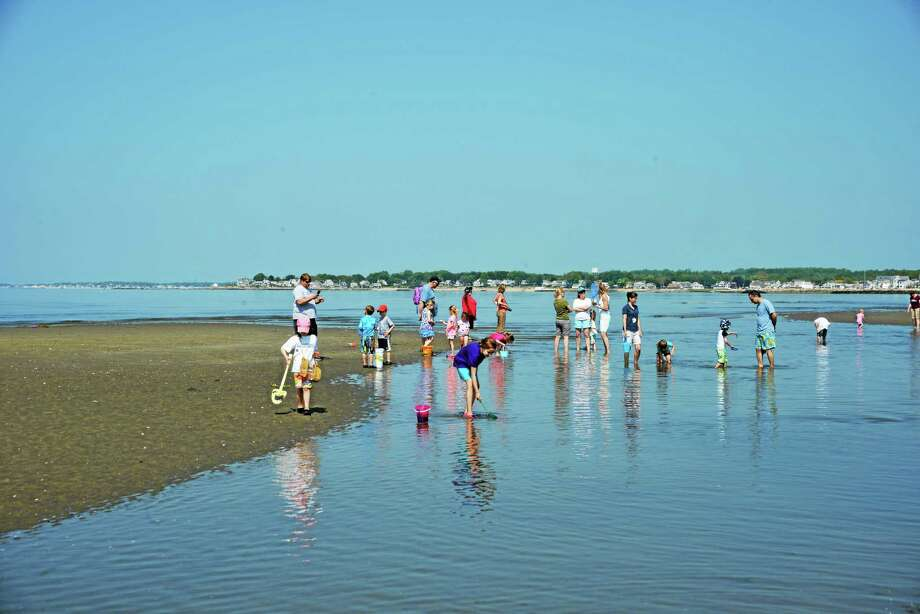 Students of the Children's Tree Montessori School in Old Saybrook visited Harvey Beach last week for their end-of-school-year field trip. Arriving at low tide, the children and parent chaperones had a few hundred yards of beach and shallow tide pools to explore. Armed with buckets, shovels and nets everyone set out to discover small ocean life left by the tide. Finds included blue crabs, baby shrimp, lots of snails, hermit crabs and even a baby horse shoe crab. Moon jellies were also a hit. Afterward, everyone snacked on fresh fruit before heading back to school for the afternoon. The Children's Tree provides Montessori education for prekindergarten to Grade 6. Photo: CREDIT HERE