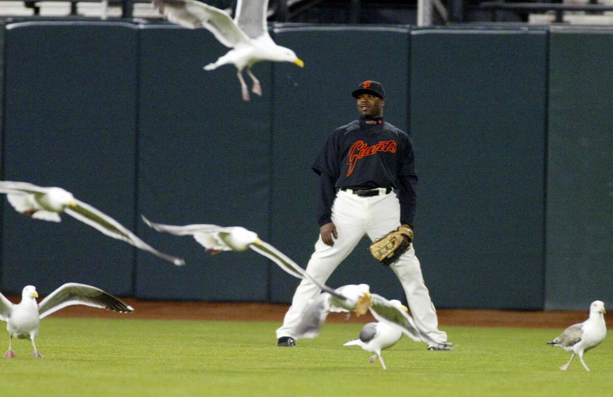 Giants outfielder Rajai Davis is surrounded by seagulls in center field March 27, 2008, during an exhibition game against the Seattle Mariners in San Francisco.