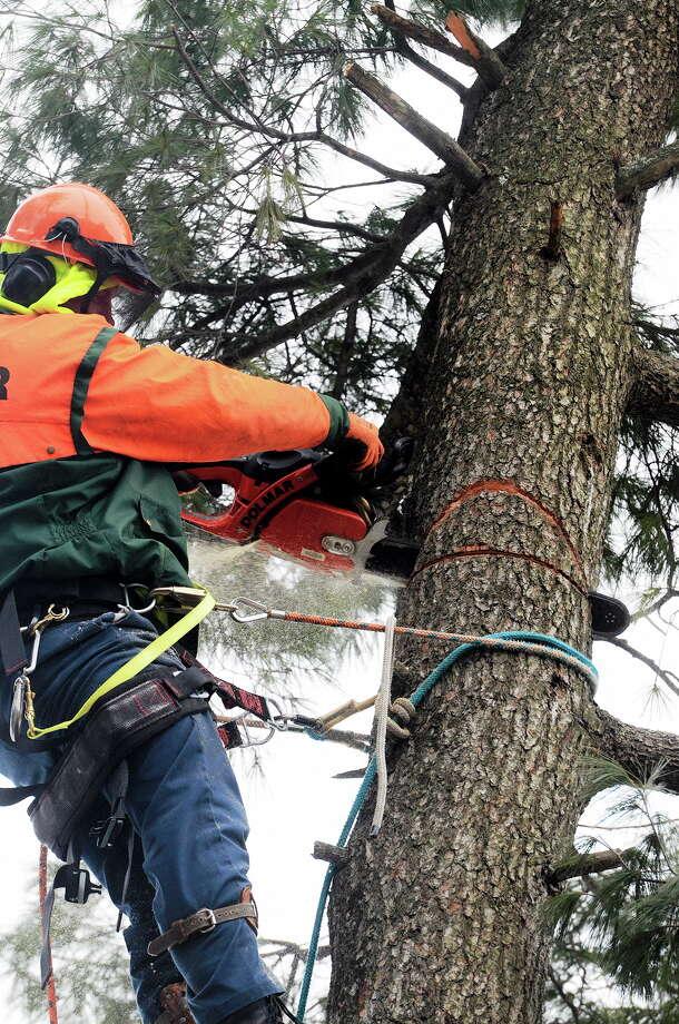 Connecticut regulators expected to issue ruling on utilities' tree