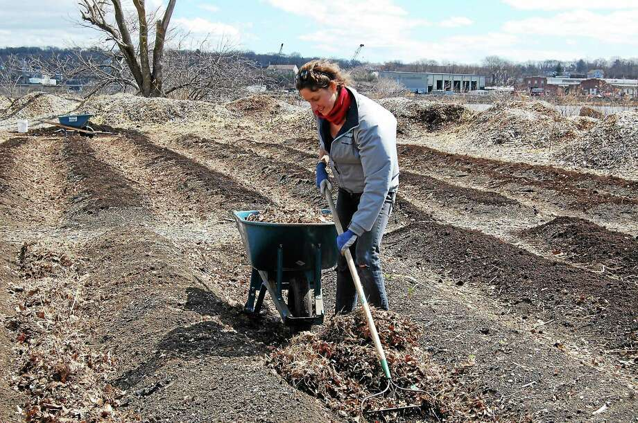 Laura Sheinkopf, a teacher at Cold Spring School, clears leaf mulch at New Haven Farm's Phoenix Press site in New Haven April 5 during Rock to Rock Environmental Service Day. Elsewhere, Girl Scouts from Derby earned their Harvest Badge by weeding and replanting the Learning Garden at Massaro Community Farm in Woodbridge. Participants also included Friends of Edgewood Park, Common Ground, Solar Youth, Farmington Canal Rail-Trail Association, Urban Resources Initiative and Friends of East Rock Park. The Rock to Rock Earth Day Ride and accompanying festivities are April 26. More at www.rocktorock.org. Photo: Caty Poole