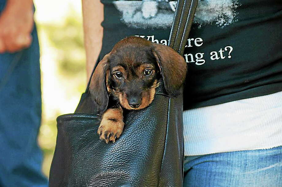 Woofstock takes place Saturday in Branford. Photo: Contributed Photo   / Copyright Mark L. Johnson