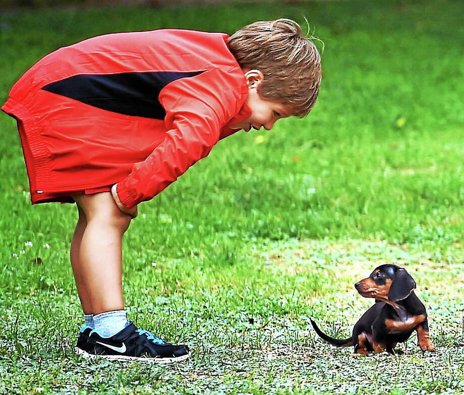 (Mara Lavitt ó New Haven Register)   August 13, 2014 Guilford  It's puppy love. Gian Paolo Cappuzzo took to the Guilford Green with a soccer ball, some throwing rings, sons Gian Maria age 9, and Julian age 5, and brand-new puppy Charlie. The Cappuzzo family of New Kent, VA, spend part of every summer at a family home in Guilford. Julian and Charlie.  mlavitt@newhavenregister.com Photo: Journal Register Co. / Mara Lavitt