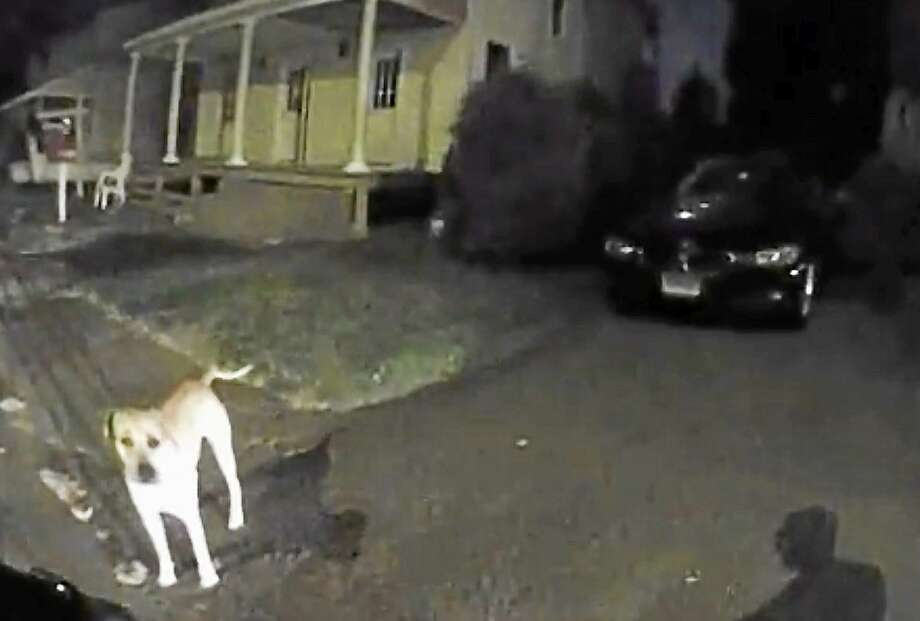 A still shot from East Haven Police Officer Gregory Borer's body camera shows Borer approaching a dog on Coe Avenue early Tuesday morning. Police said Borer shot the dog after it attacked him. The dog survived, and Borer was not hurt. Photo: Journal Register Co.