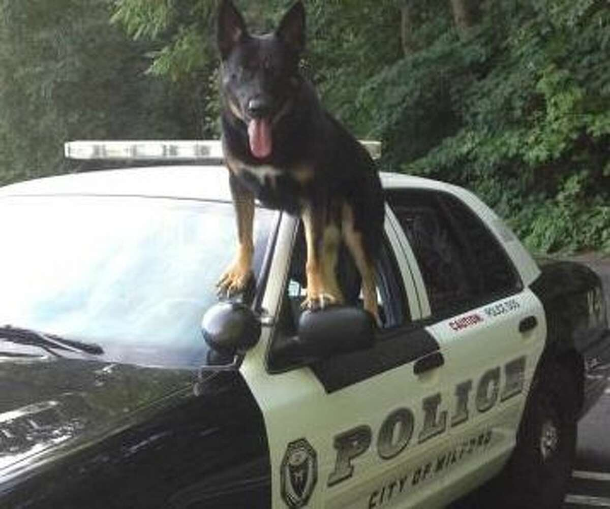 Milford K-9 Diesel recently received a donated ballistic vest from Vested Interest in K9s, Inc.