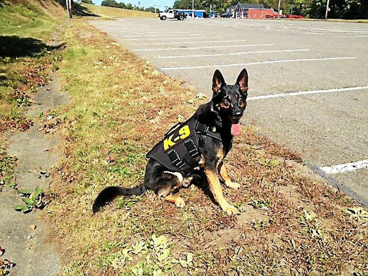 Connecticut State Police K-9 Gibson shows off a ballistic vest donated by Fidelco Guide Dog Association through the Vested Interest in K9s, Inc. charity organization.