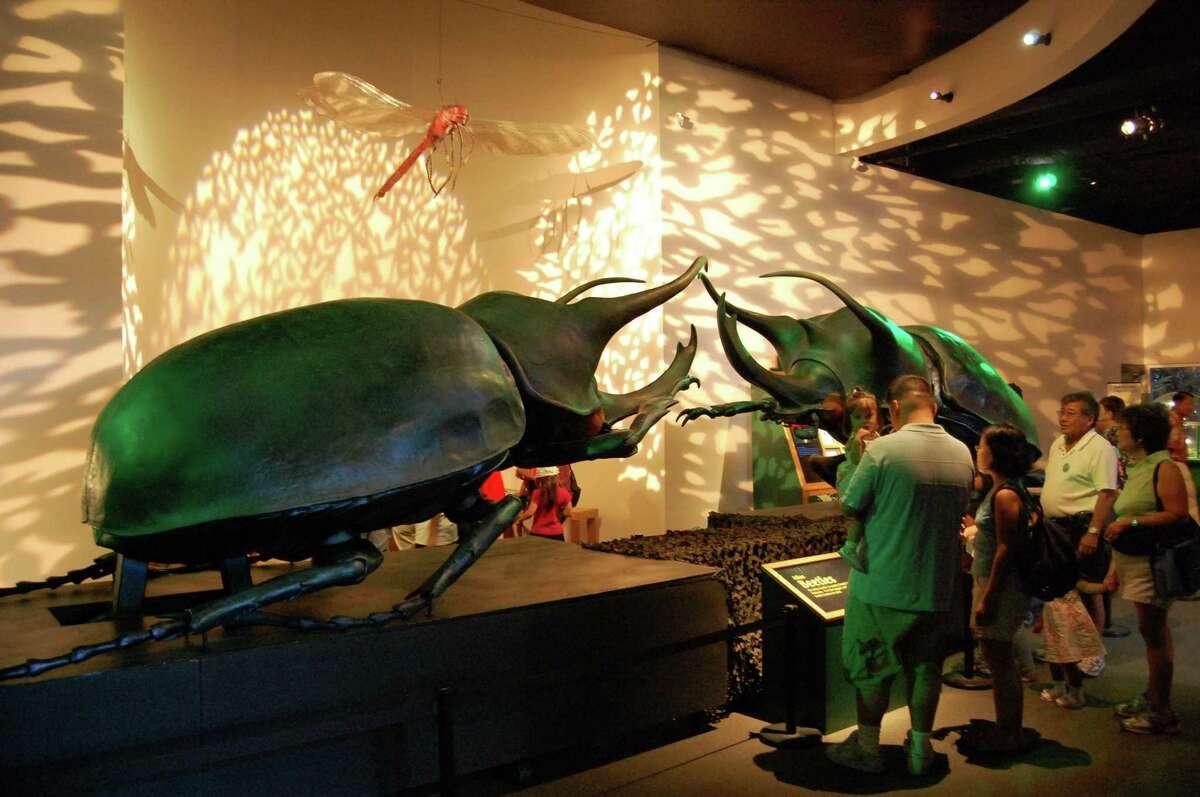"""Backyard Monsters"" continues at Mashantucket Pequot Museum through mid-May."