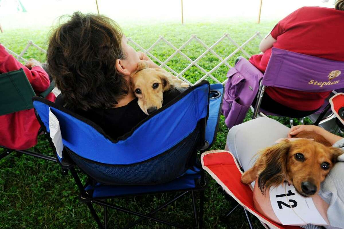 Owners and their dogs take a break at The Greenwich Kennel Club's All-Breed Dog Show at Taylor Farm in Norwalk, Conn. on Saturday June 12, 2010.